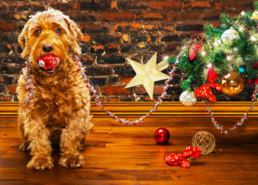 Six Ways to Dog Proof Your Christmas Tree
